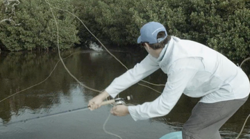 WARNING: Some people might consider these tarpon videos NSFW!