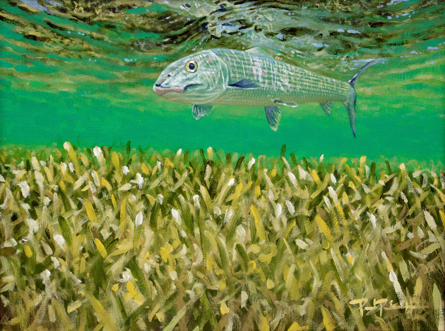 Bonefish Over Turtlegrass Print