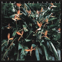 Bird of Paradise LP