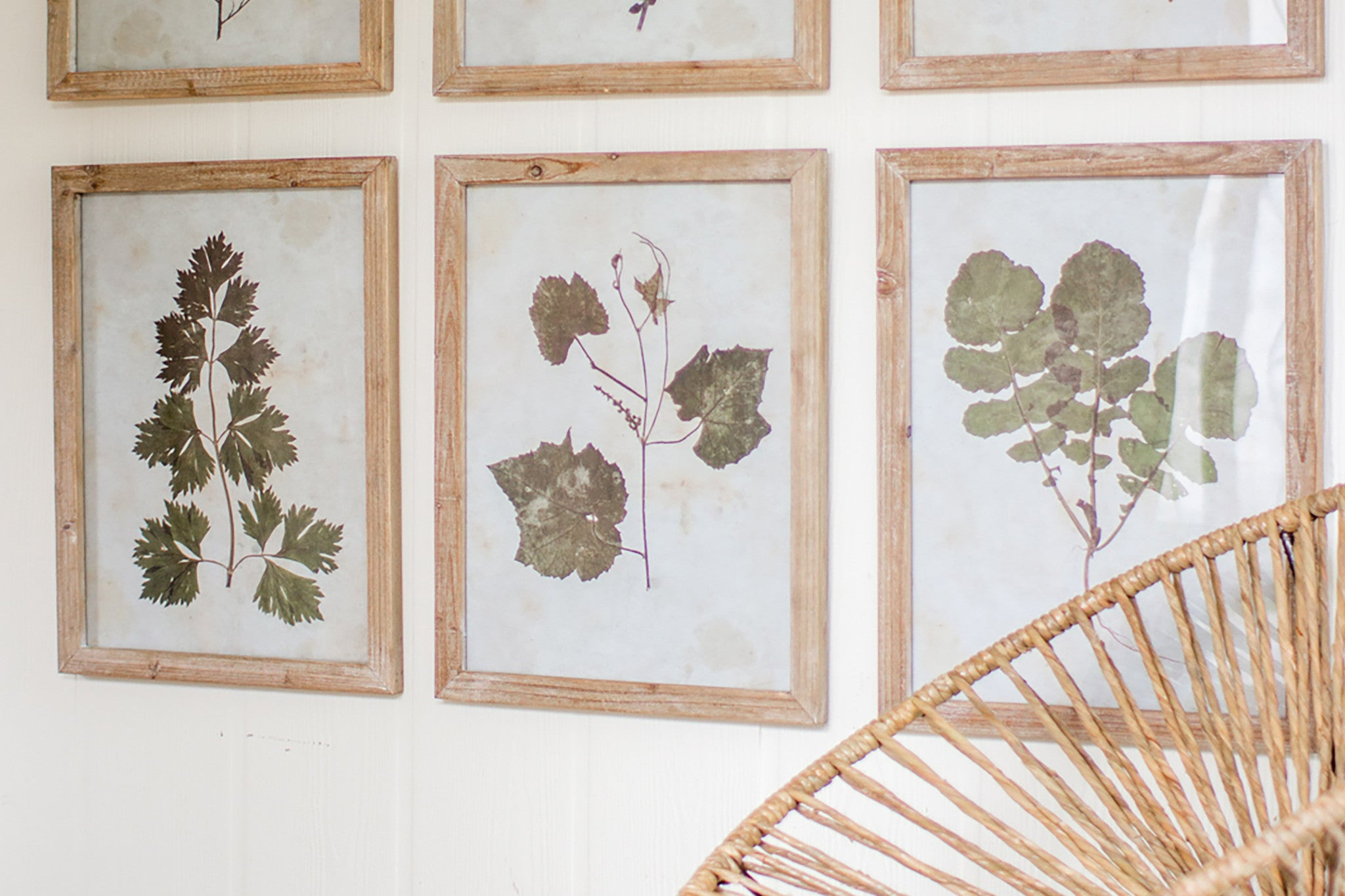Botanic Leaf Prints With Rustic Wood Frames - Set of 6