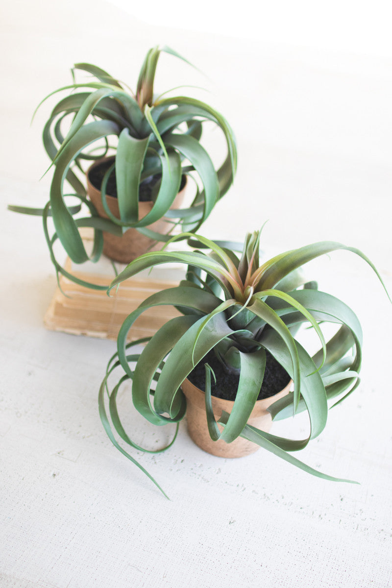 Artificial Faux Air Plants In Pots - Set of 2