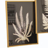 Black and White Framed Fern Plant Prints - Set of 2