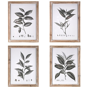 Botanical Leaf Wall Art Illustrations - Set of Four