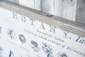 Botany Botanic Flower Plant Framed Wall Art