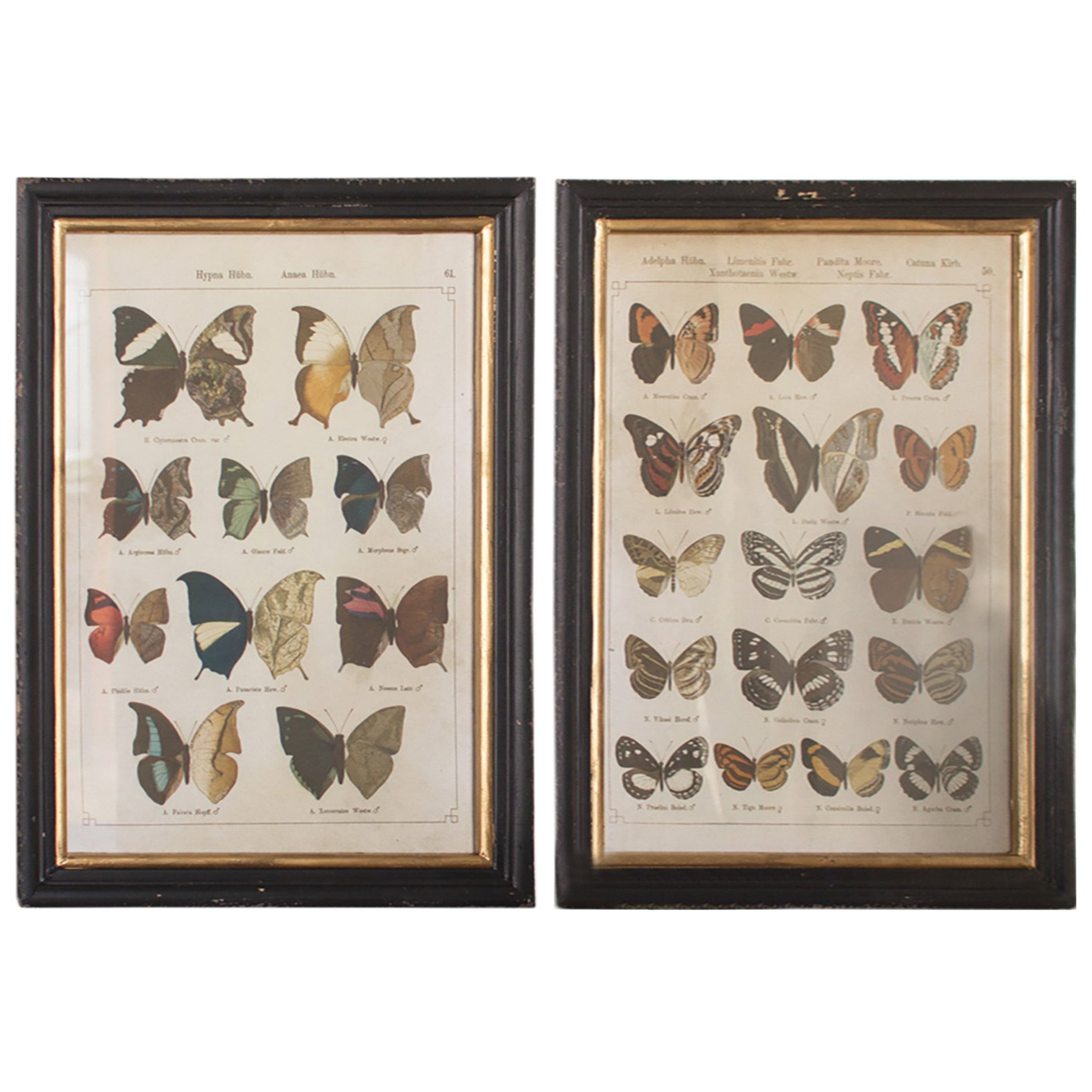 set of two rustic butterfly prints with black frames woodwaves