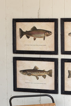 Set of Four Trout Fish Prints With Black Frame