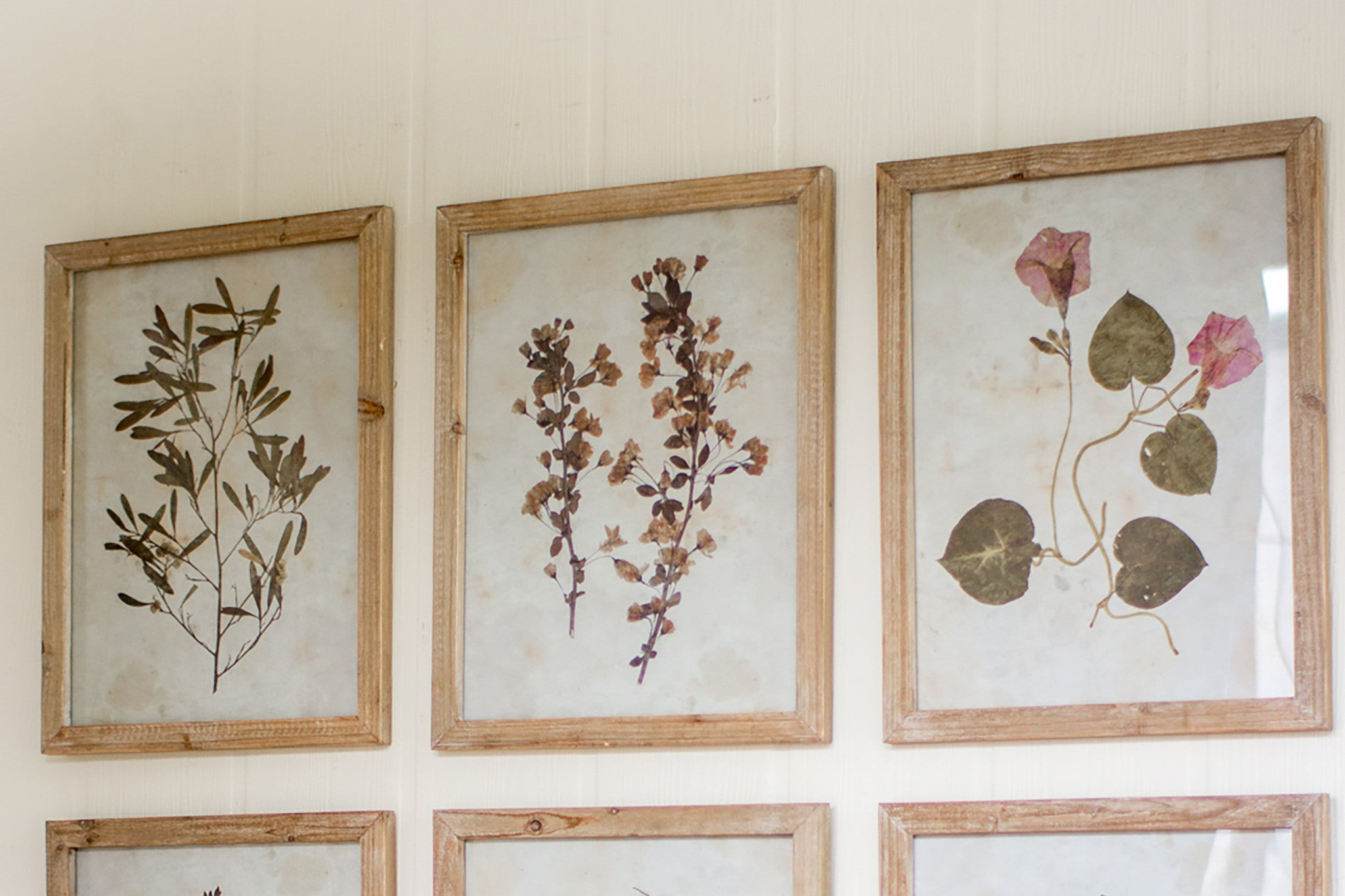 Set of Six Leaf Prints With Rustic Wood Frames - Woodwaves