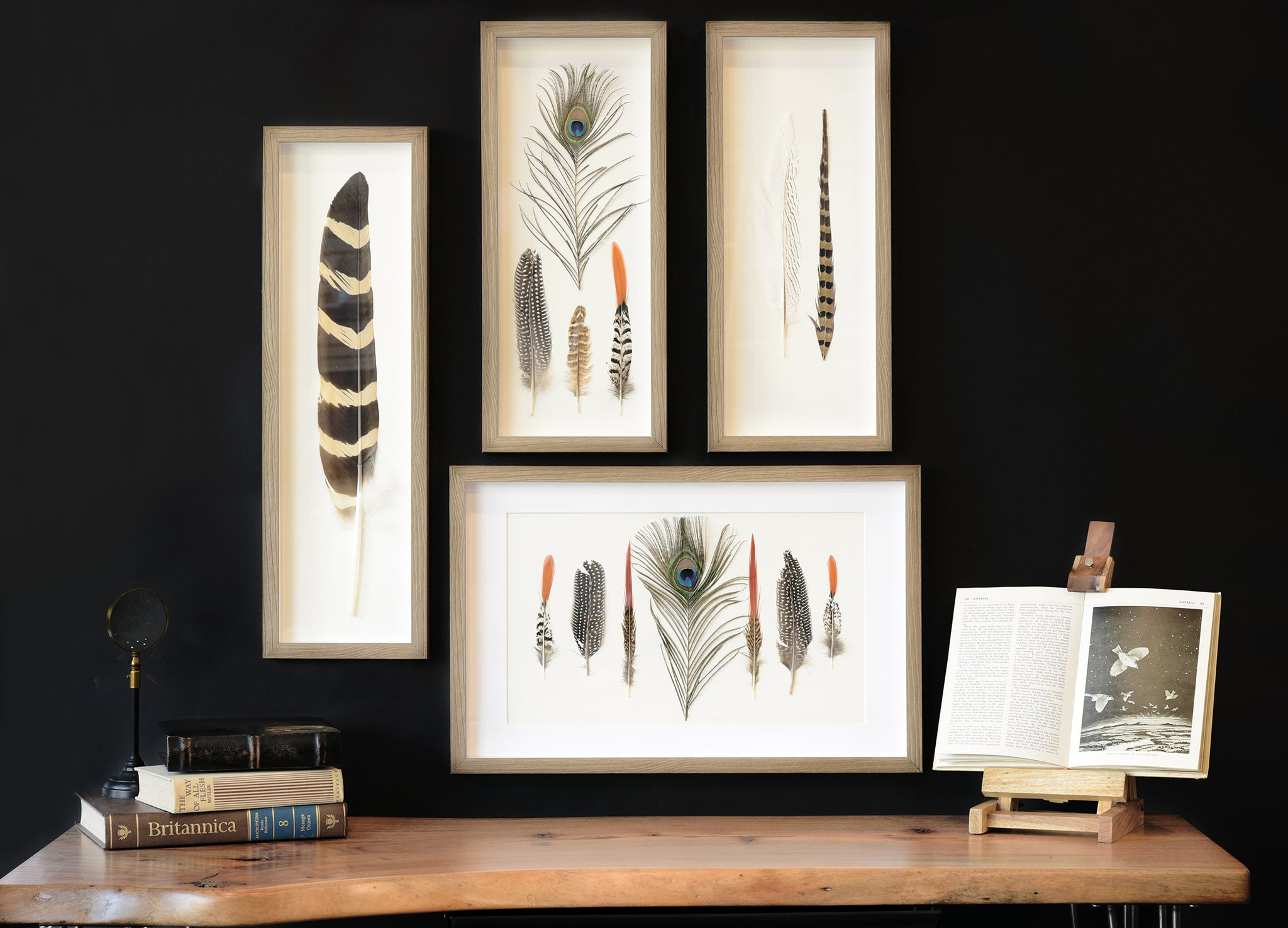 Large Framed Feather Wall Art