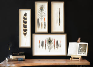 Framed Peacock and Bird Feather Wall Art