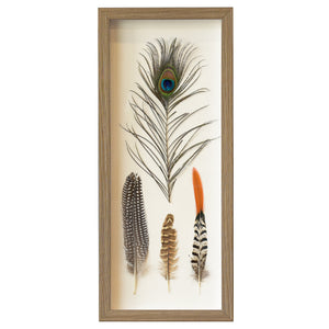 Framed Peacock and Bird Feather Farmhouse Wall Art