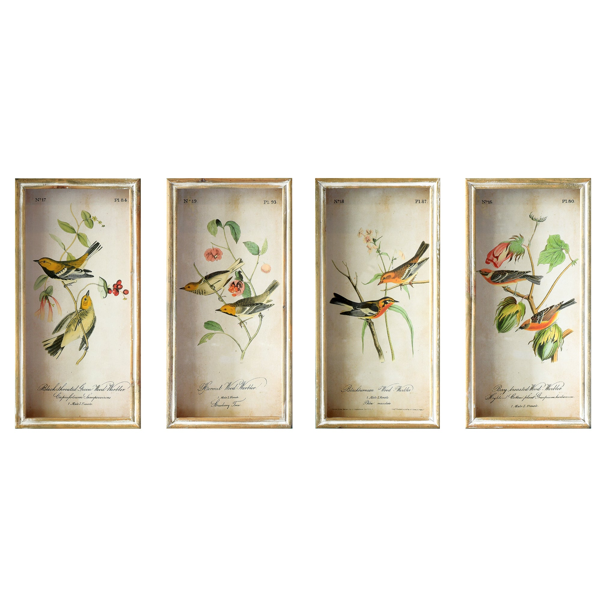 Framed Shadow Box Bird Illustration Wall Art Prints - Set of 4