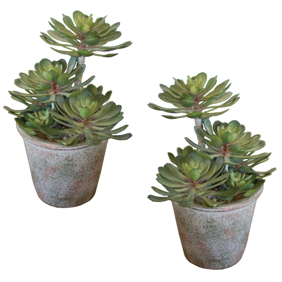 Large Artificial Succulent Plants In Pots - Set of 2
