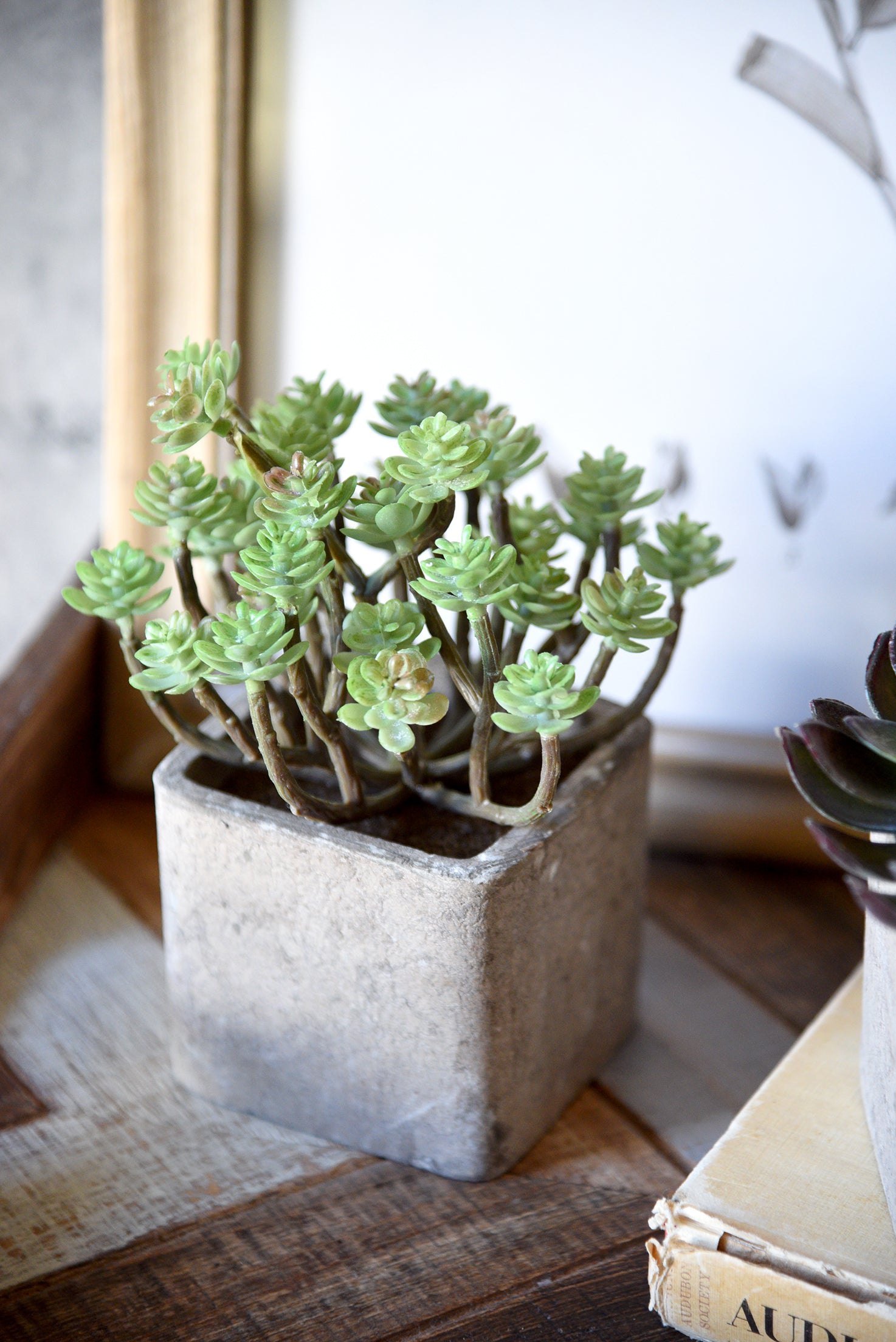 Modern Artificial Succulent Plants in Pots - Set of 3