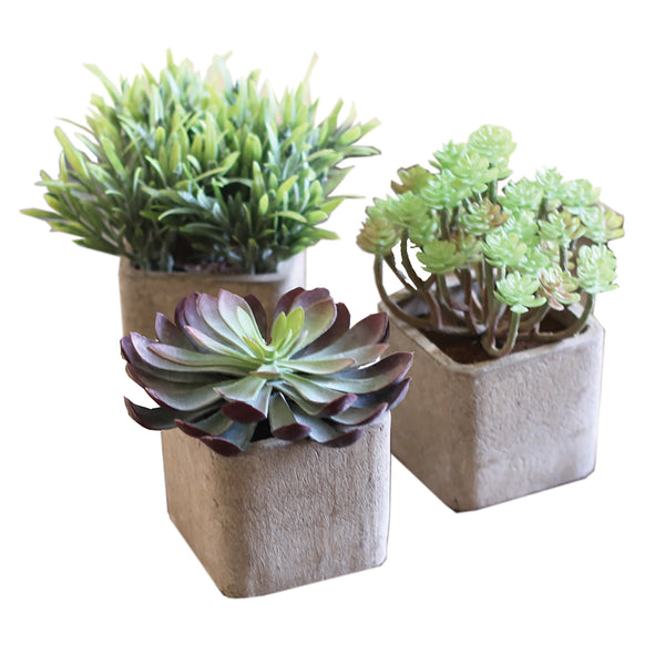 Set Of 3 Artificial Succulents In Pots Woodwaves