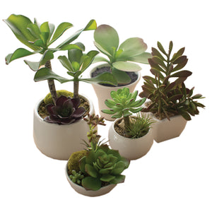 Set of 5 Artificial Succulents With Pots