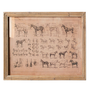 French Equine Horse Anatomy Chart With Wood Frame
