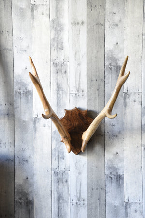 Rustic Wood Mounted Antlers