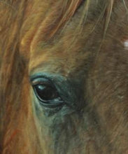 "Art  A Mare Study in Oil ""Wisdom"""