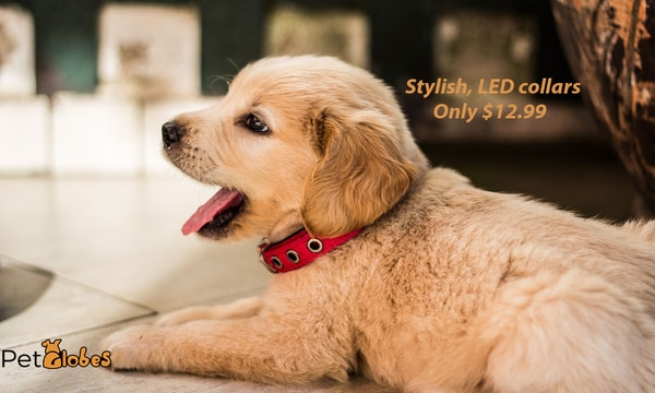 https://petglobes.com/collections/collars-leashes-harnessess/products/rechargeable-flashing-night-dog-collars-usb-luminous-pet-collar-led-light-usb-charging-dog-collar-glowing-teddy-flash-collar-pet