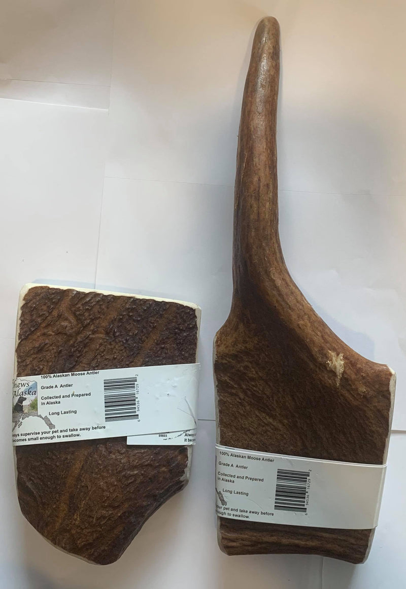 Moose Antler, Trophy Buck, Alaska, Chews Alaska, Large Antler