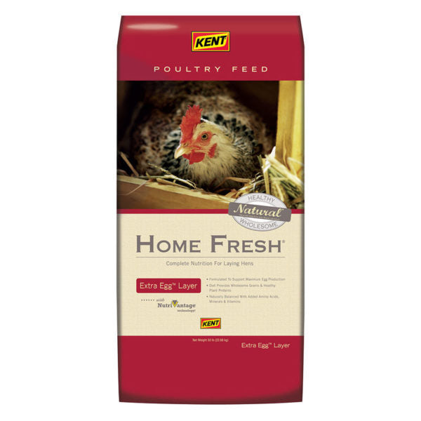 Kent Home Fresh Extra Egg Layer