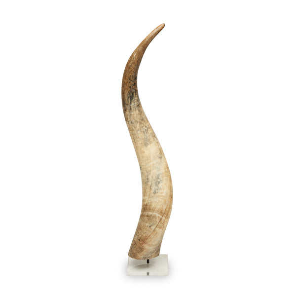 Cow Horn on Lucite Stand