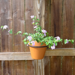 Flower Pot Ring w/Invisible Mount for Standard 6 Inch Terracotta Pot - Black, PR-9021