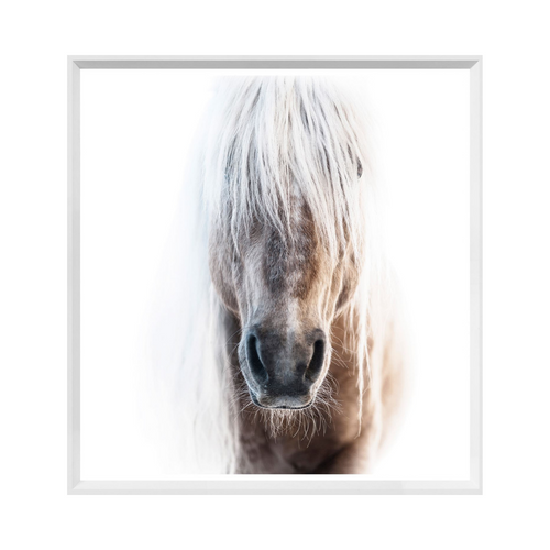 White Palomino Art