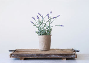 Lavender in Paper Pot