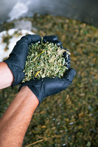 Cannabis being added to kettle