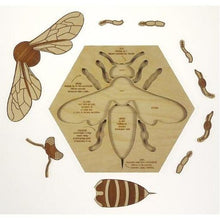 Busy Bee Anatomy Puzzle