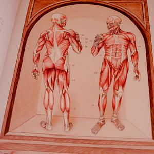 Anatomicum ~ Welcome To The Museum