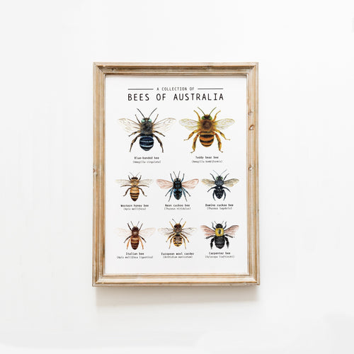 Bees Of Australia Poster