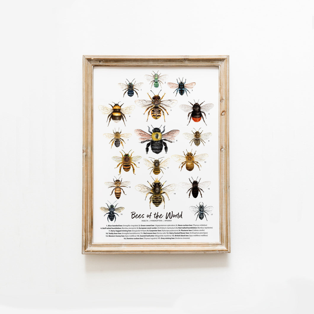 Bees Of The World Version 1