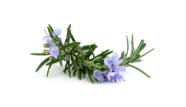 dōTERRA Rosemary Essential Oil - 15ml