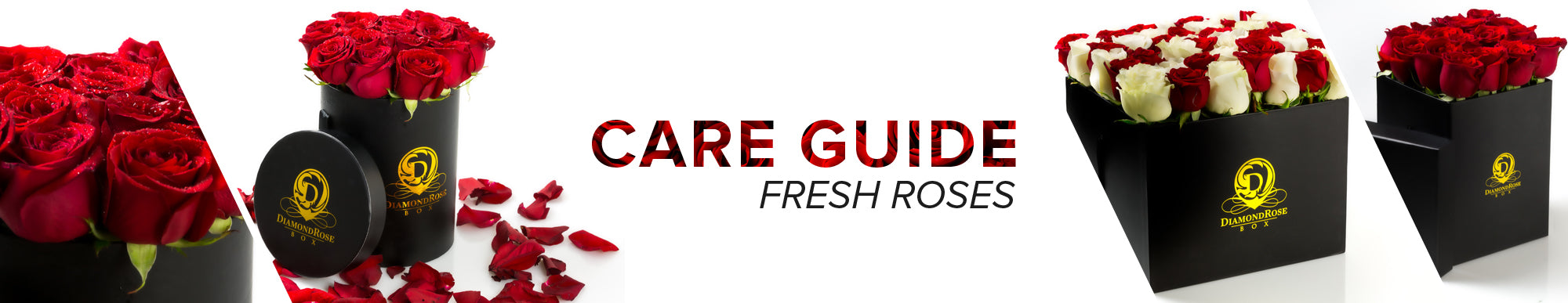 Care Guide Fresh Roses