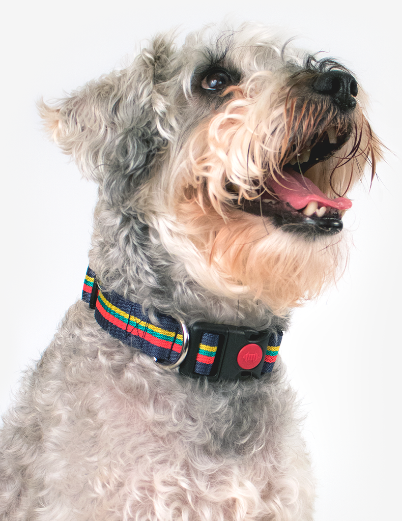 Corps Coloured Clip Dog Collar