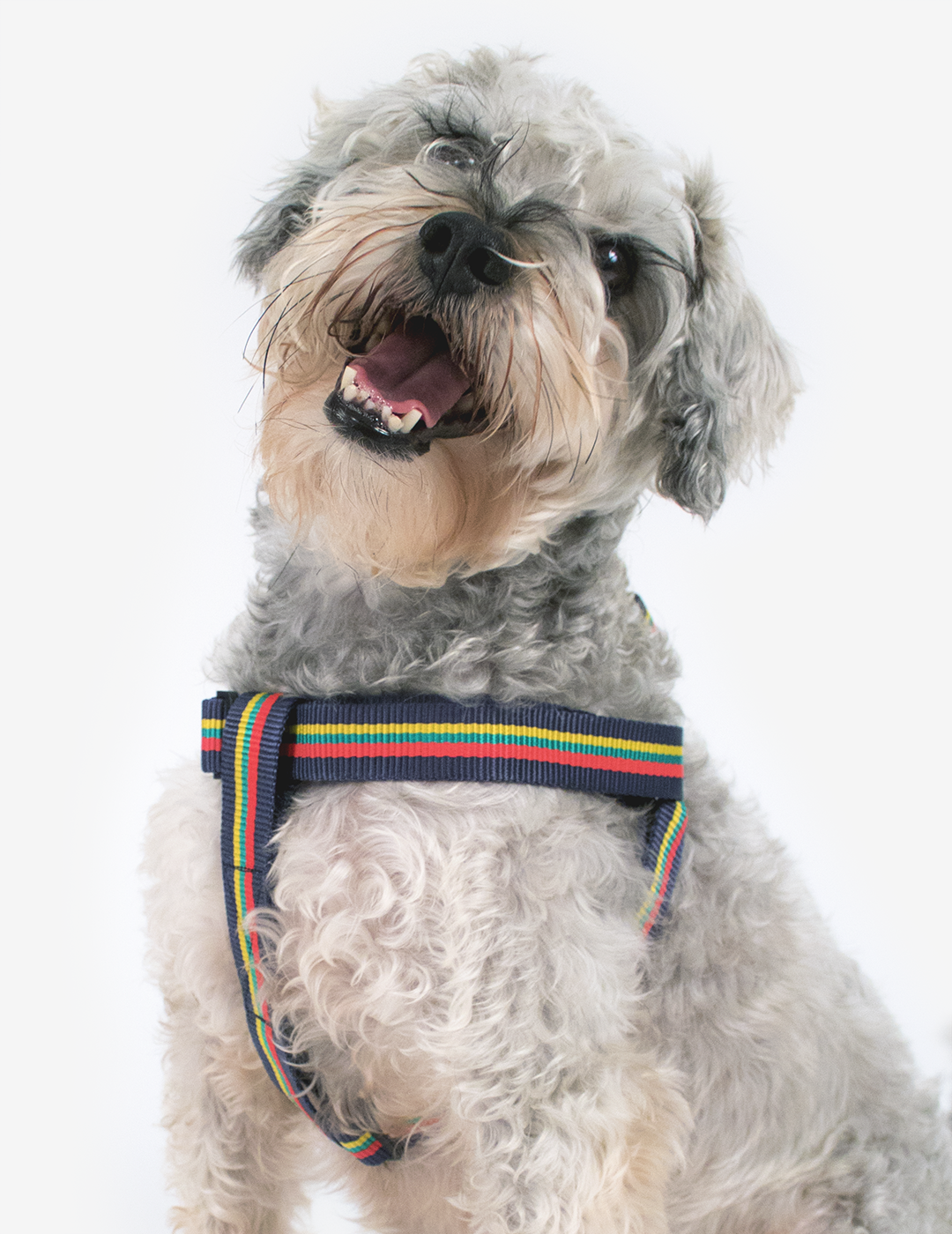 Corps Coloured Dog Harness