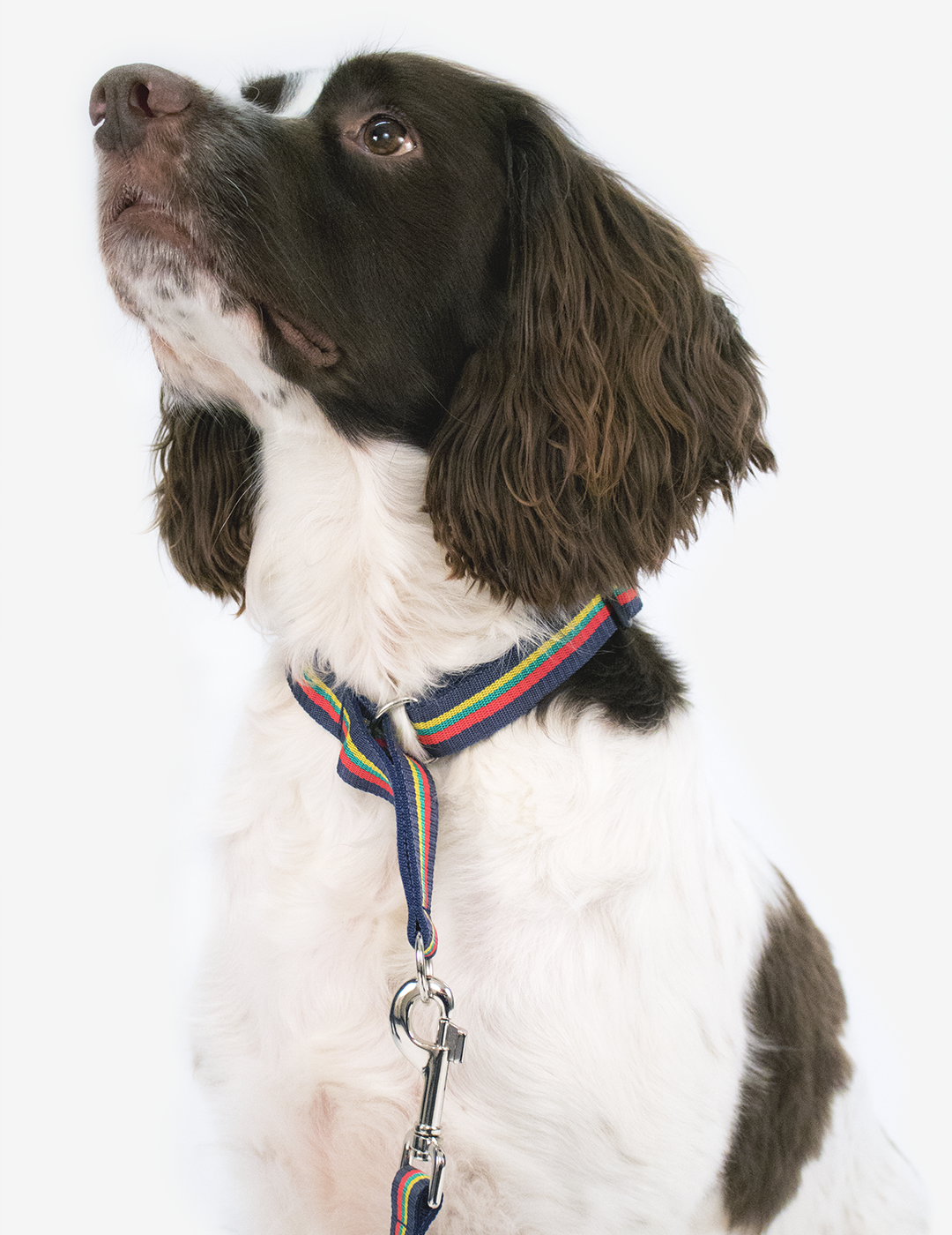 Corps Coloured Slip Dog Collar