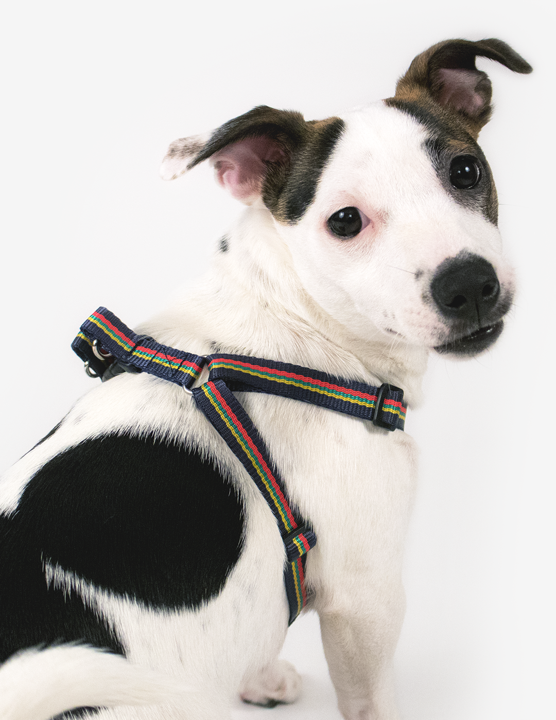 Corps Coloured Small Dog Harness