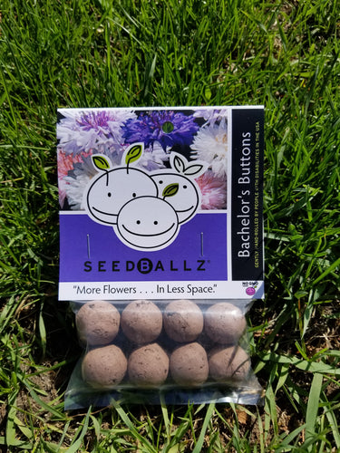 Bachelor Button SeedBallz