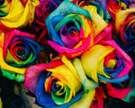 Roses in abstract colors - Bambuce
