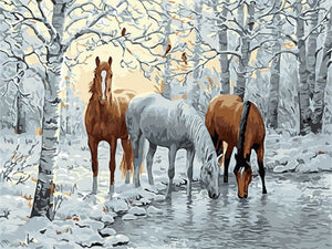 Horse collection | 18 options | DIY Oil Paint by Numbers - Bambuce