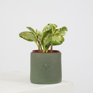 Mini Face Planter in Mongolian Green - individual-medley