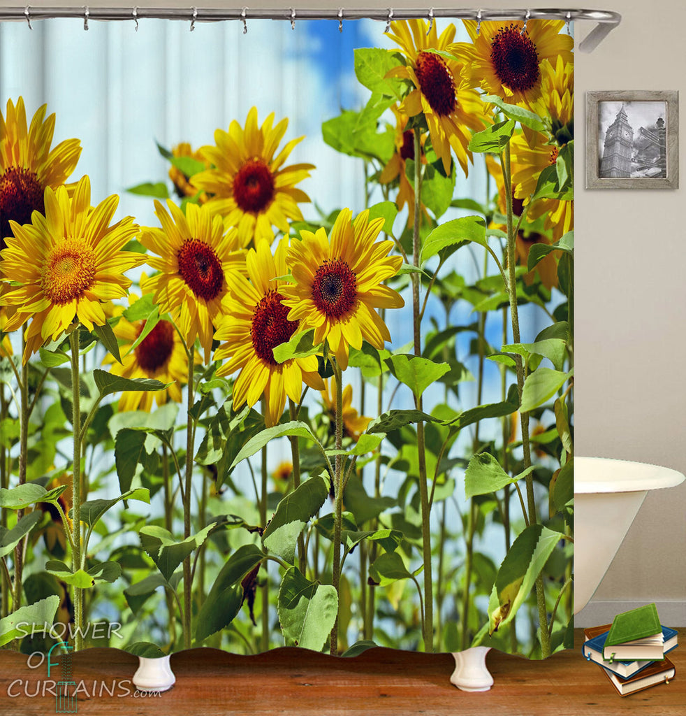 Sunflower Shower Curtain of Long Stems Sunflowers