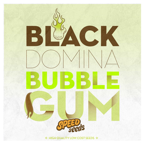 Black Domina x Bubble Gum