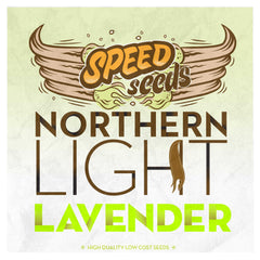 Northern Light x Lavender
