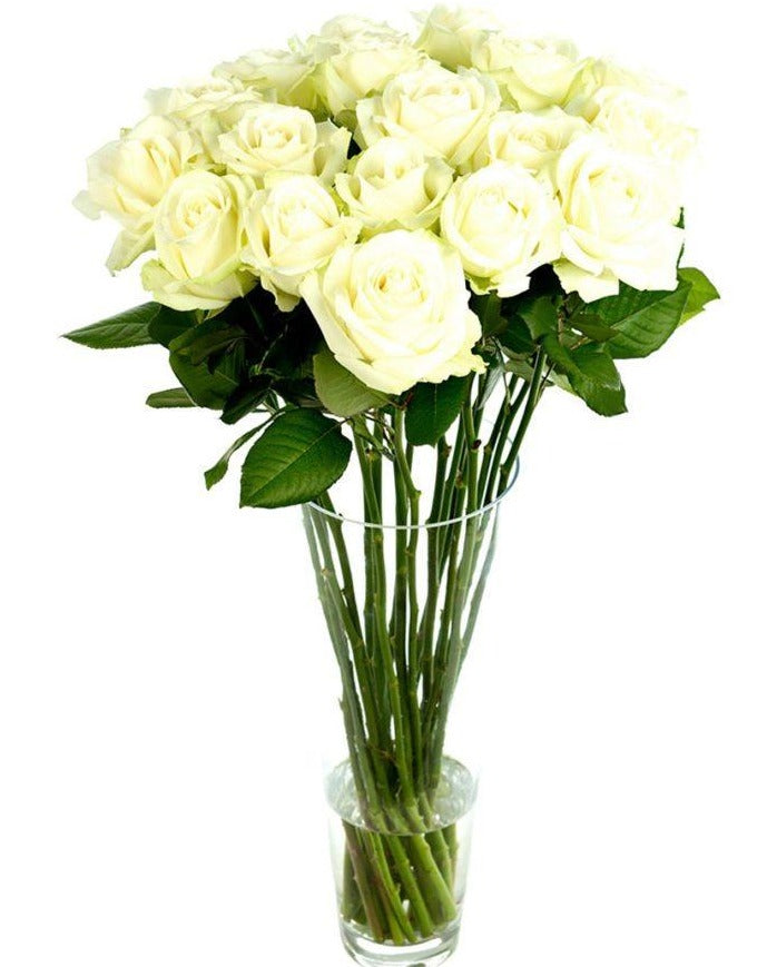 Bouquet Roses Blanches Longues