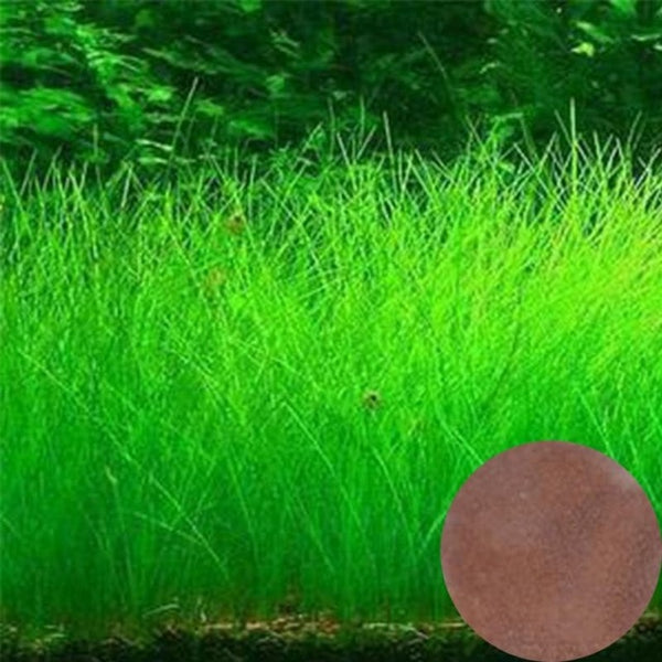 NEW Plant Grass Aquarium Fish Tank Plants Prospects Grass Seeding Grass Landscaping Plant Decoration DROP SHIPPING