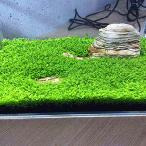 Aquarium Plant Seed Easy Growing Aquarium Water Plant Grass Seed Fish Tank Lawn Decor